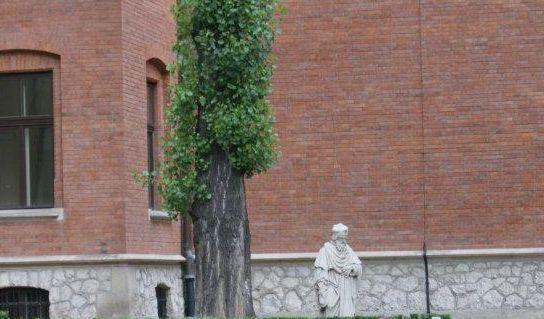 Proffessorfiguren i trädgården bakom Collegium Maius